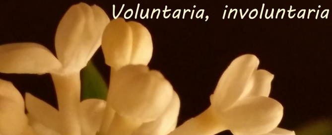 voluntaria e involuntaria