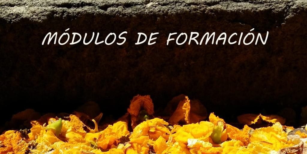 MÓDULOS DE FORMACIÓN