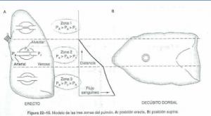 Posición horizontal en decúbito dorsal